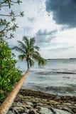 Дерево рядом с океаном стоковое изображение rf