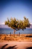 Дерево рядом с морем Стоковые Изображения