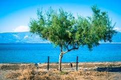 Дерево рядом с морем Стоковая Фотография