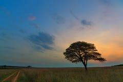 Дерево рядом с дорогой Стоковые Фото