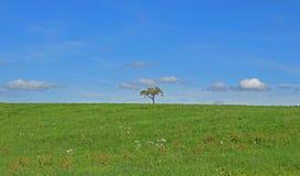 Дерево самостоятельно на поле Стоковая Фотография RF