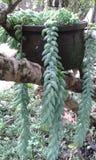 Дерево сада Стоковые Фотографии RF