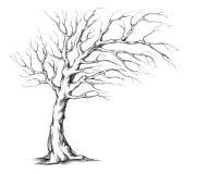 Дерево свадьбы с несимметричной кроной иллюстрация вектора