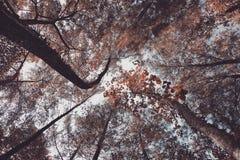 Дерево сезона низкого угла в лесе стоковые фото
