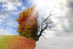Дерево сезона осени и зимы Стоковое фото RF