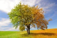 Дерево сезона стоковое изображение
