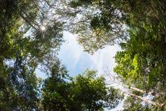 Дерево сени смешанного лиственного леса в Таиланде Стоковые Фотографии RF