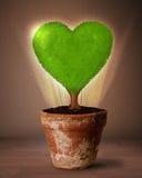 Дерево сердца Eco приходя вне от цветочного горшка Стоковые Изображения