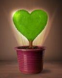 Дерево сердца Eco приходя вне от цветочного горшка Стоковое фото RF
