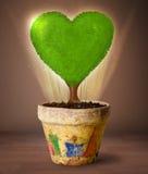 Дерево сердца Eco приходя вне от цветочного горшка Стоковое Фото