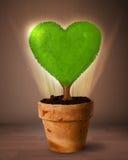 Дерево сердца Eco приходя вне от цветочного горшка Стоковые Фото