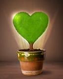 Дерево сердца Eco приходя вне от цветочного горшка Стоковое Изображение