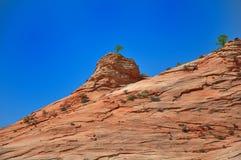 Дерево Сиона Стоковая Фотография