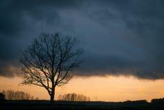 Дерево силуэта без листьев Стоковые Фотографии RF