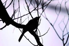 Дерево силуэта и небо птицы и лаванды Стоковые Фото