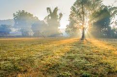 Дерево силуэта на футбольном поле и солнечный луч в утре Стоковые Изображения RF