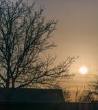 Дерево силуэта против солнца Стоковые Изображения