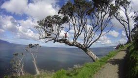 Дерево скалы Стоковая Фотография RF