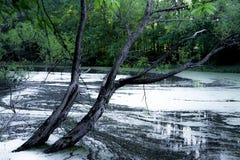 Дерево склонности на ландшафте озера Стоковое Изображение
