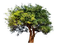Дерево сломленно Стоковое Изображение RF
