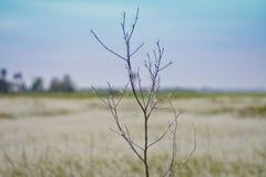 Дерево смерти Стоковая Фотография