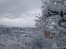 Дерево снега в фокусе Стоковое Изображение RF
