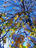 Дерево снега Чикаго Стоковое Изображение RF