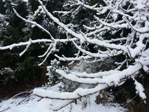 Дерево 2 снега Стоковая Фотография RF