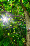 Дерево снизу и свет солнца стоковое изображение rf