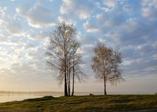 Дерево, солнце, поднимая, counteropenwork Стоковое фото RF