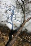 Дерево со своей тенью стоковое изображение