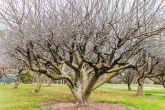 Дерево стоит без листьев осенью, зима, весна, предпосылка леса Осень Aerly Зеленая трава вокруг дерева стоковые изображения