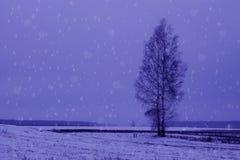 Дерево стоит в поле в тумане и снеге Стоковая Фотография