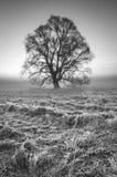 Дерево стоит на морозном луге Стоковые Изображения