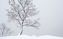 Дерево стойки одно Стоковое фото RF