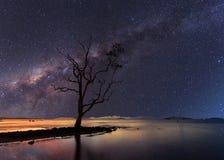 Дерево стойки одно под звездной ночью ясно с млечным путем стоковое фото rf