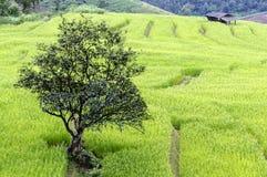 Дерево стойки одно Стоковые Фото