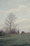 Дерево стробом северным Йоркширом Стоковые Изображения