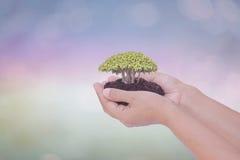 Дерево строгая на женских человеческих руках с запачканное естественным Стоковые Фото