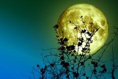 дерево супер силуэта задней части полнолуния сухое и красочное небо стоковая фотография