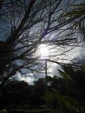 Дерево сухих хворостин, с проходом его среди своих ветвей, освещая день стоковая фотография