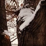 Дерево с белым пальто Стоковые Фотографии RF