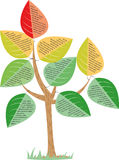 Дерево с большими листьями Стоковые Фото