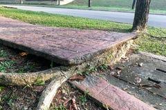Дерево с большими корнями разрушает сломало мостоваую дорожки повреждения Стоковая Фотография