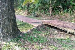 Дерево с большими корнями разрушает сломало мостоваую дорожки повреждения Стоковое Изображение RF