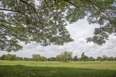 Дерево с ветвью и зеленой травой Стоковое Изображение