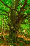 дерево с ветвями замотки Стоковое Фото