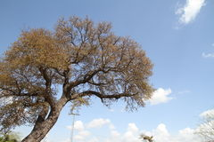 Дерево с голубым небом и облаками Стоковое фото RF