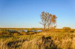 Дерево с желтыми листьями в плотной траве нет поля около b Стоковая Фотография RF