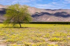 Дерево с знаменем тени Стоковая Фотография